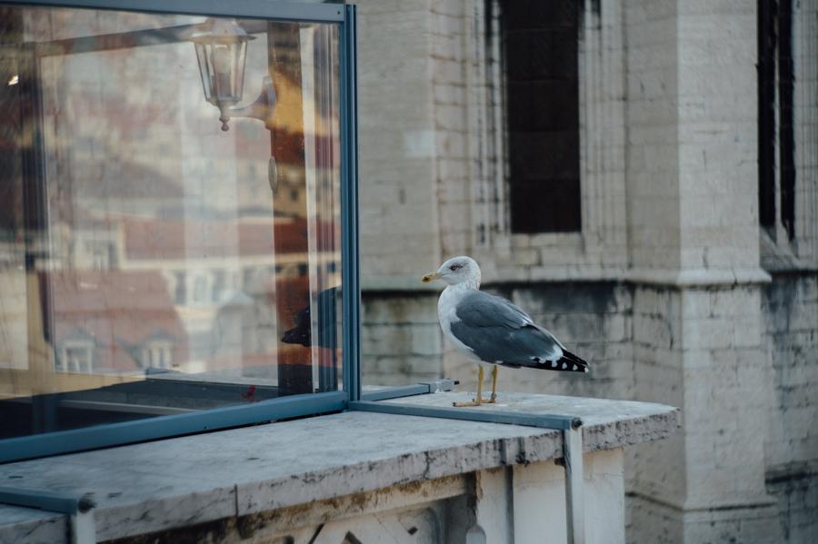 Fotografia gaivota, Lisboa, photographer, Kathrin Stahl