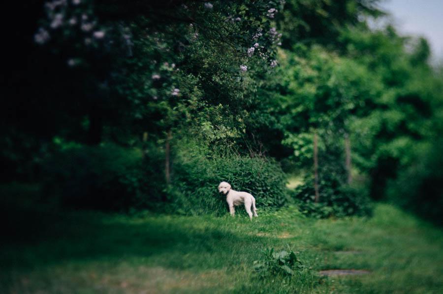 Ruegen, Urlaub, Hochzeit, Fotograf, Kathrin Stahl008