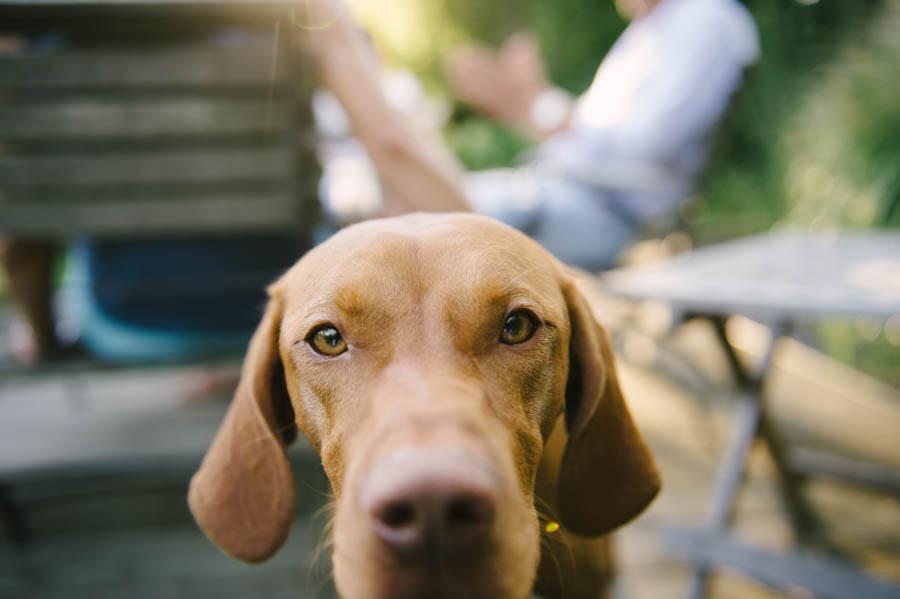 fotograf-hund-hamburg-kathrin-stahl