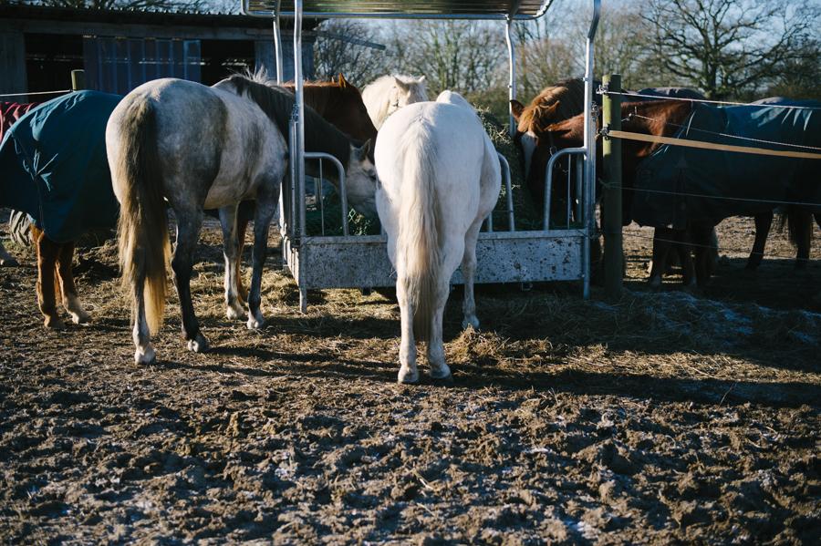 Caballo, Pferd, Fotograf, Kathrin Stahl, Hamburg, 001