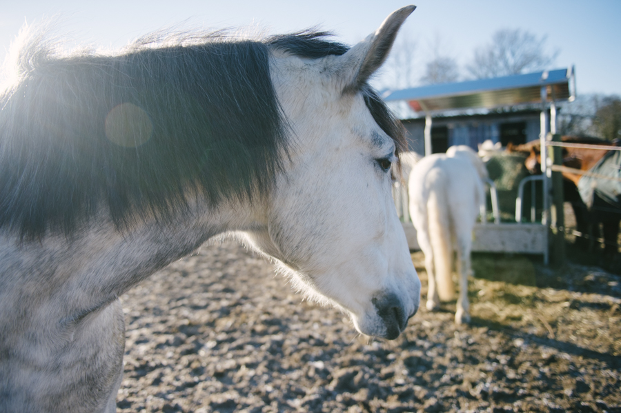 Caballo, Pferd, PRE, Fotograf, Kathrin Stahl, Hamburg