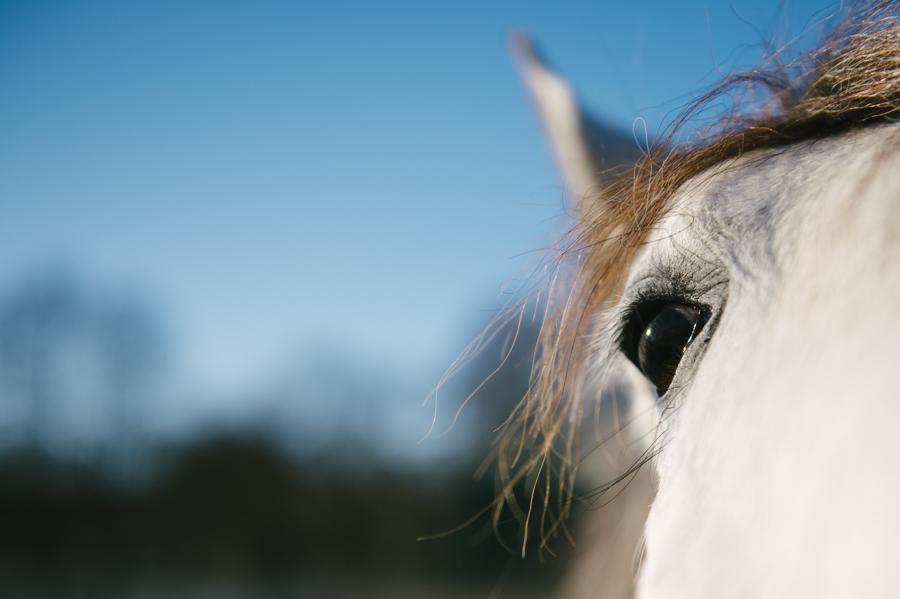 Auge, Pferd, Fotograf, Kathrin Stahl, Hamburg, 008