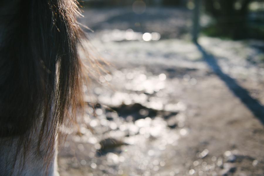Caballo, Pferd, Fotograf, Kathrin Stahl, Hamburg, 009