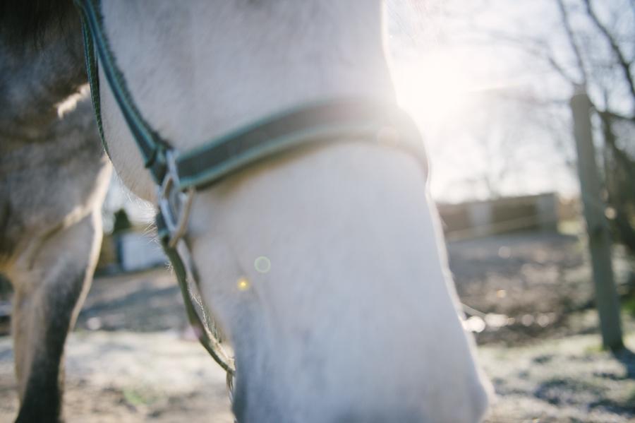 Caballo, Pferd, Fotograf, Kathrin Stahl, Hamburg, 010