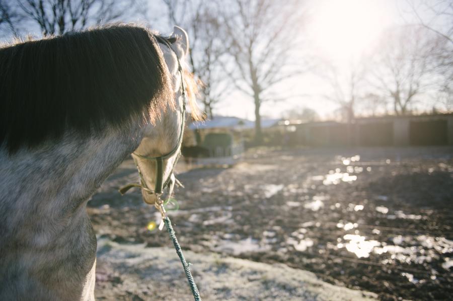 Caballo, Pferd, Fotograf, Kathrin Stahl, Hamburg, 012