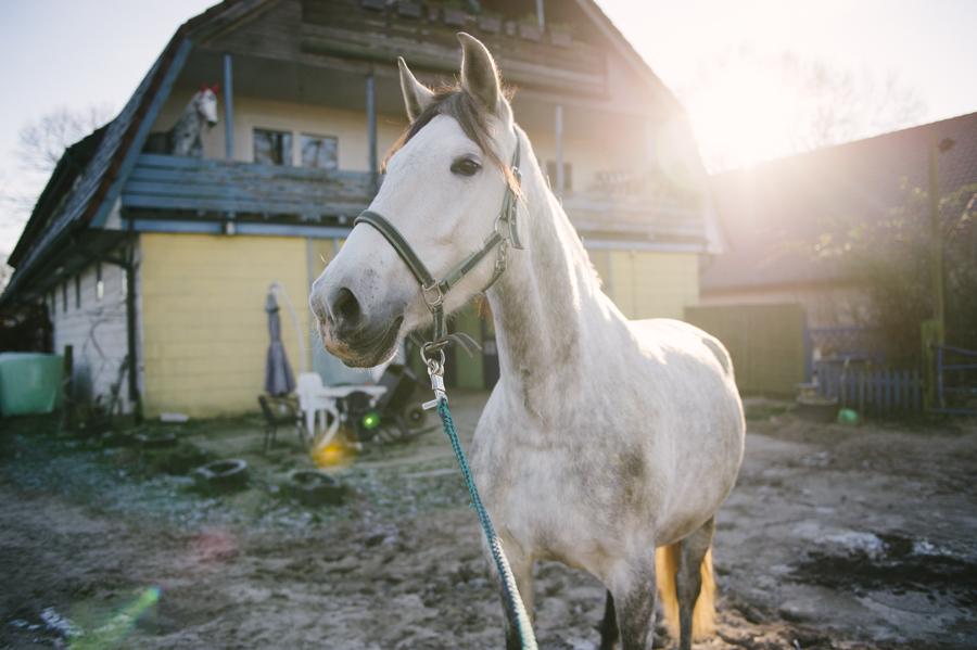 Kraftspender, PRE, Pferd, Fotograf, Kathrin Stahl 013