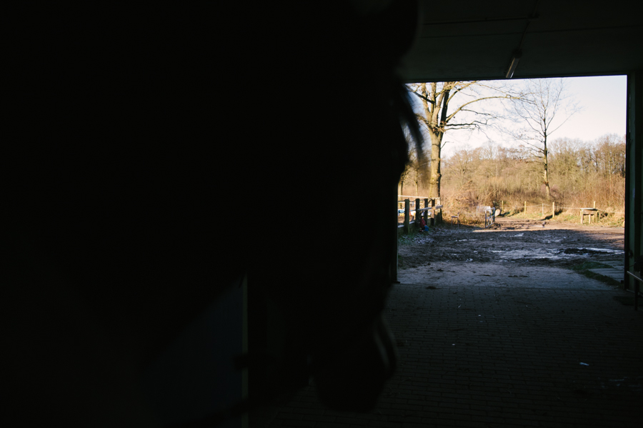 Caballo, Pferd, Fotograf, Kathrin Stahl, Hamburg, 016