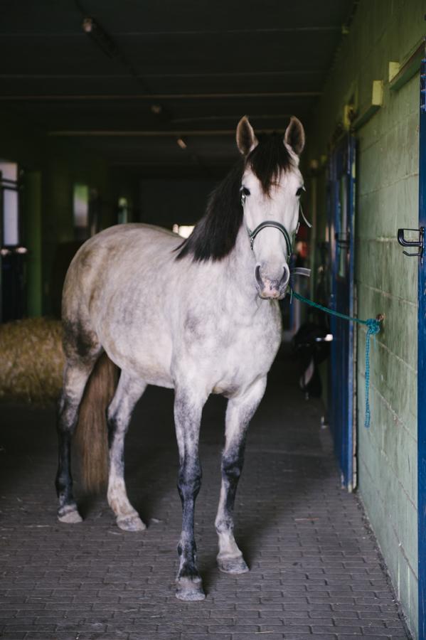 Kraftspender, Pferd, Fotograf, Kathrin Stahl, Hamburg