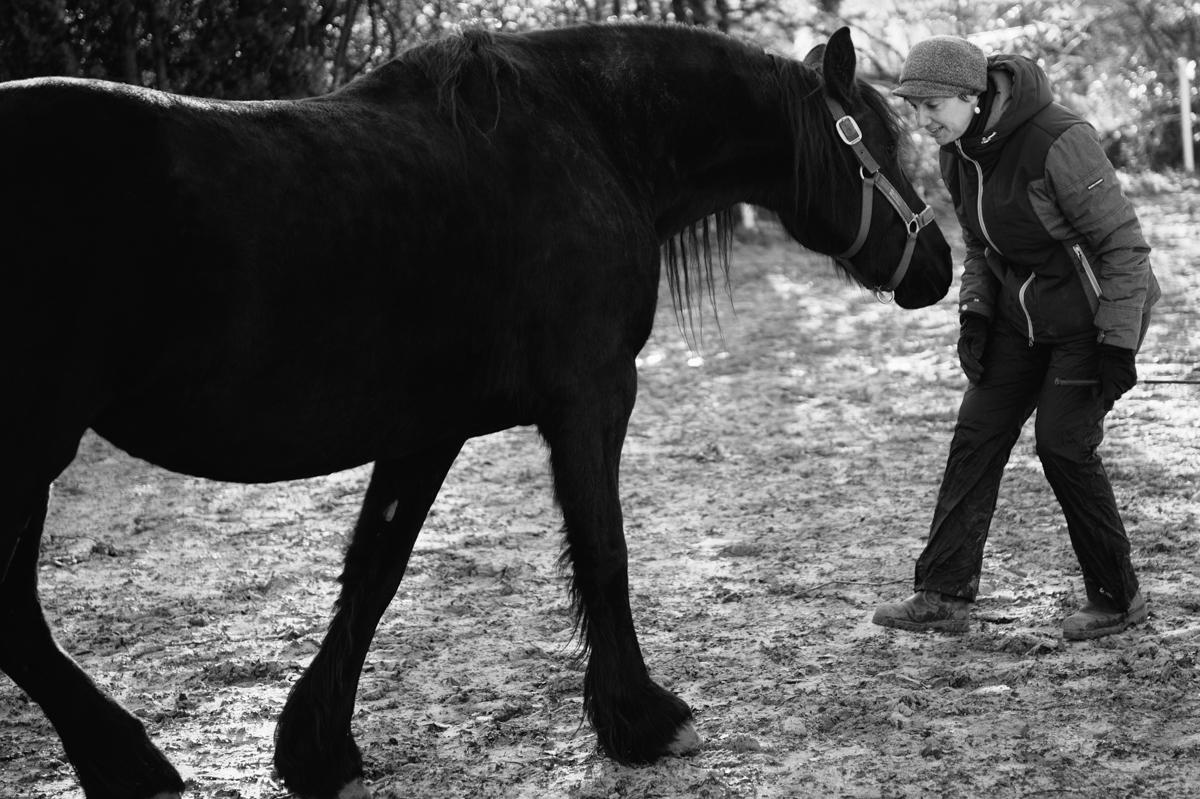 Pferd, Fotograf, Tier, Hamburg, Kathrin Stahl, 010