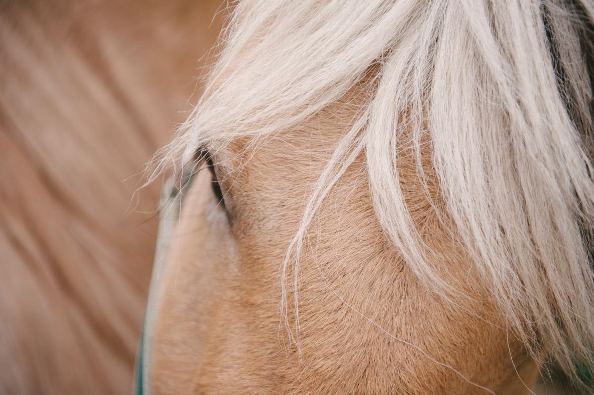 Pferd, Fotograf, Familie, Doku, Hamburg, Kathrin Stahl_023
