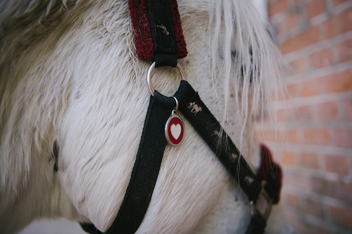 Photographer, Horse, documentary, Pferd, Kathrin Stahl-3