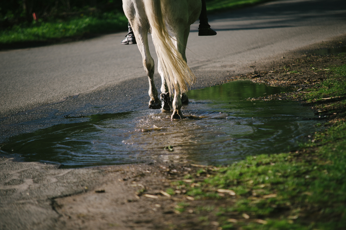 Photographer, Horse, documentary, Pferd, Kathrin Stahl-40