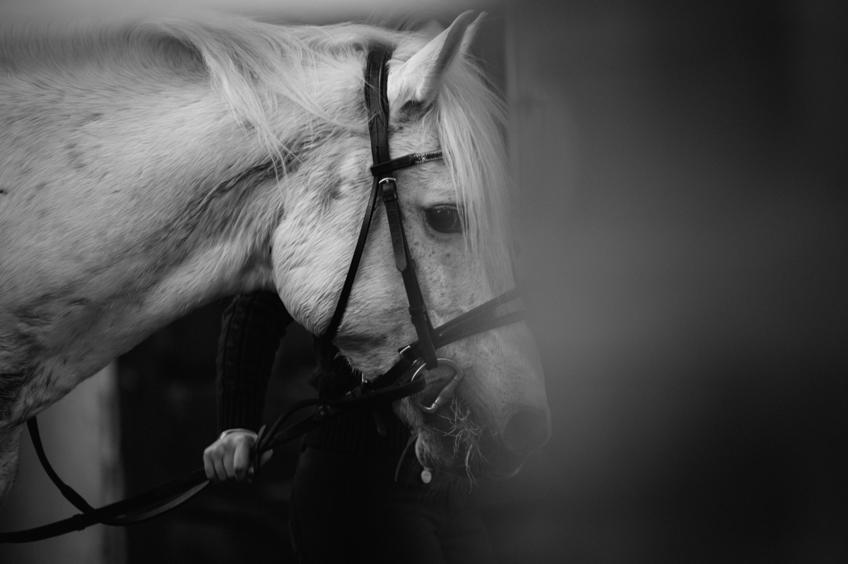Photographer, Horse, documentary, Pferd, Kathrin Stahl-45