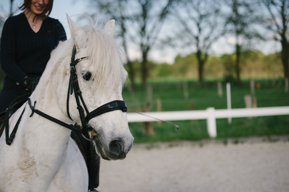 Pferd, Fotograf, Dokumentarisch, Hamburg, Kathrin Stahl_053