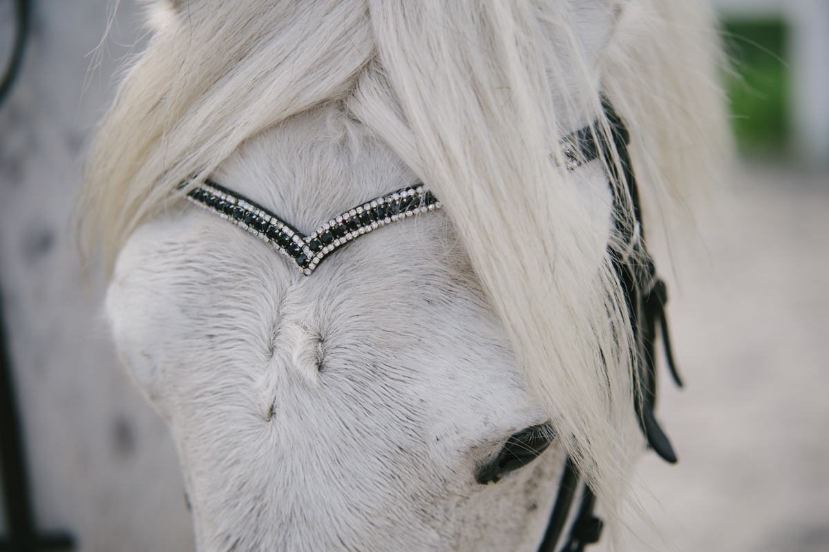 Pferd, Fotograf, Dokumentarisch, Hamburg, Kathrin Stahl_054