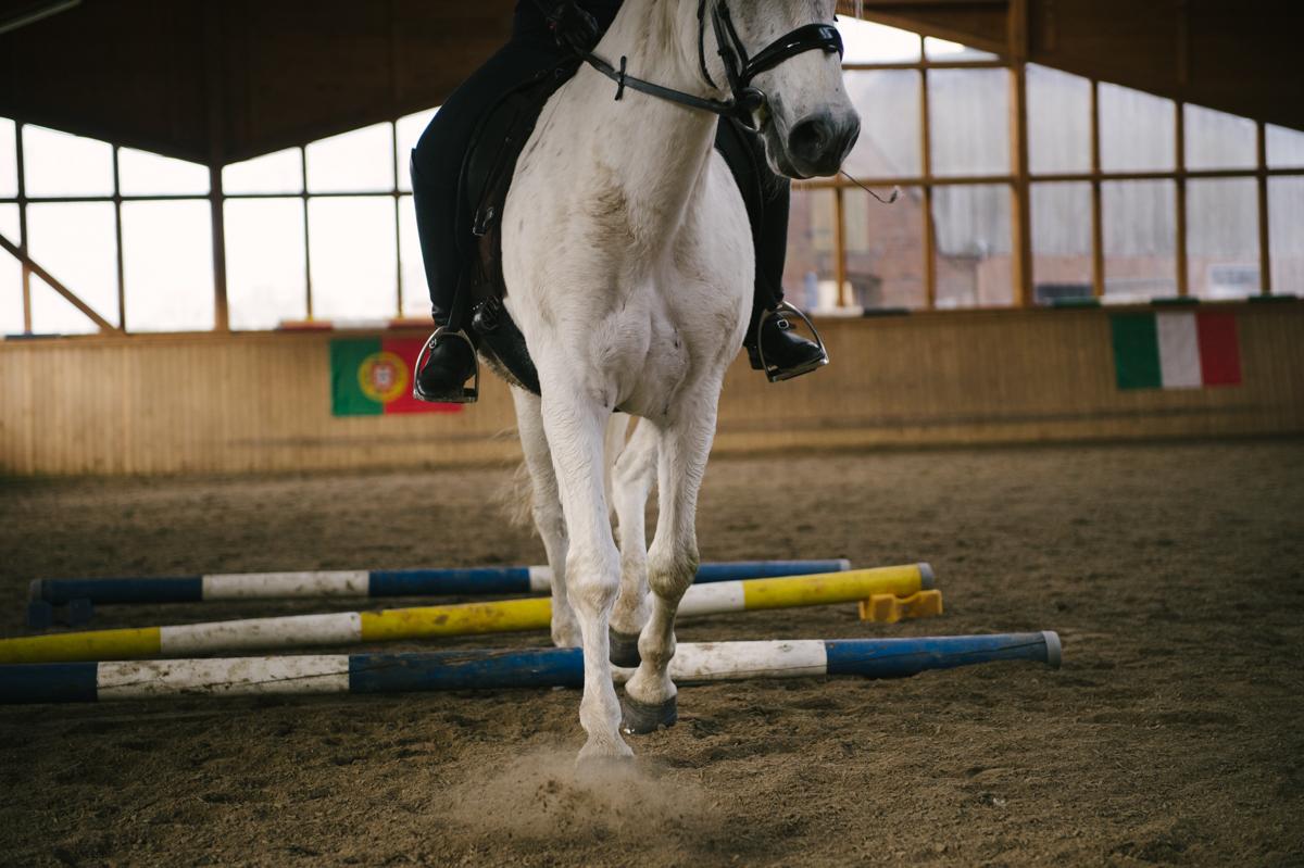 Pferd, Fotograf, Dokumentarisch, Hamburg, Kathrin Stahl_063