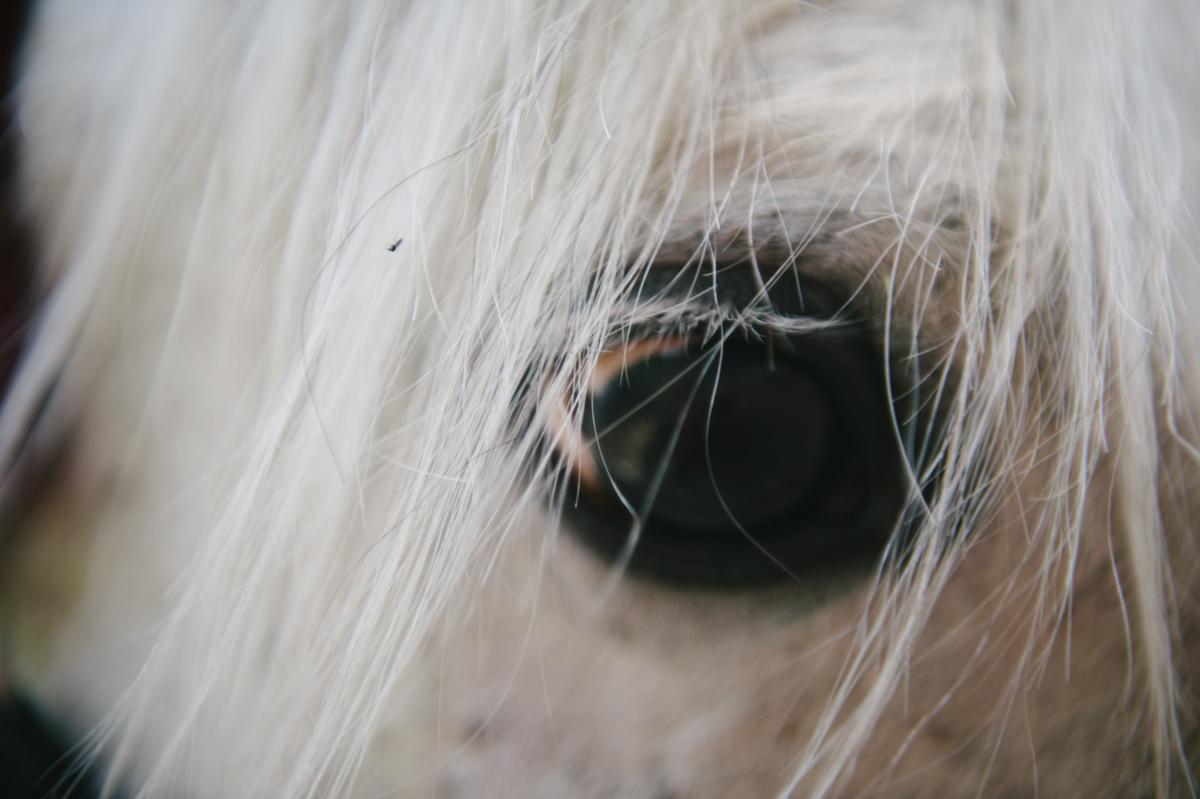 Fotokurs, Jugendlich, Hamburg, Detailfoto, Pferd
