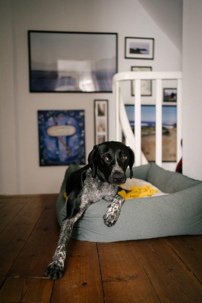 Familie mit Hund sucht Fotografin mit Hund